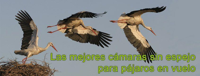Las mejores cámaras sin espejo para pájaros en vuelo