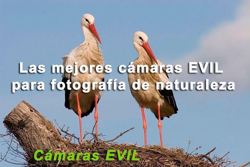 Mejores Cámaras Evil fotografía naturaleza